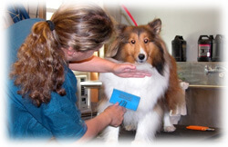 Dog Grooming Equipment